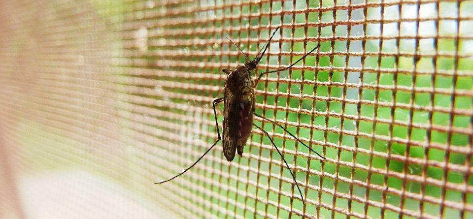 Komárom Esztergom megye ablakos, Komárom Esztergom megye redőnyös, Komárom Esztergom megye árnyékolás, Komárom Esztergom megye árnyékolástechnika, szúnyogháló szerelés, műanyag keretes szúnyogháló, szúnyogháló rendszer